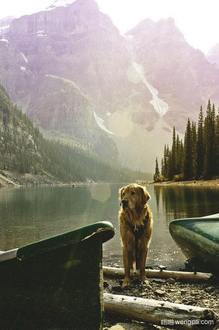 一只狗不在乎你是富人还是穷人,聪明还是愚蠢。把你的心交给他,他会给你他的。