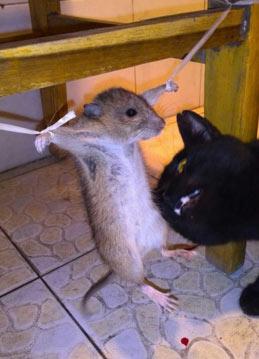 觉得这老鼠可怜的举手