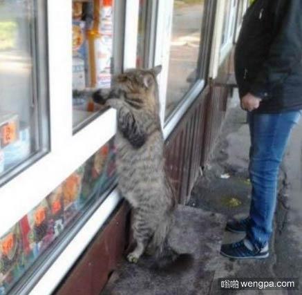 老板,我要买小鱼干!