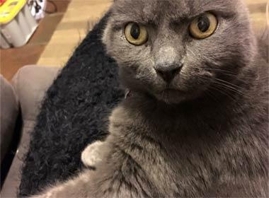 愤怒的猫:谁敢扰乱我的睡眠?_猫_搞笑图片 - 嗡啪萌宠