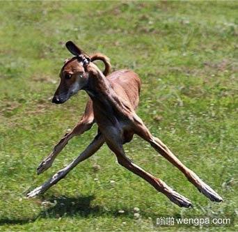 狗狗的180度急转弯
