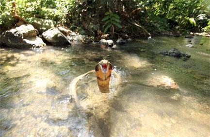 眼镜王蛇在水中弹起