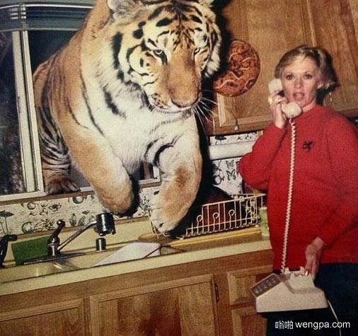 行了不说了 有只老虎从窗户跳进来