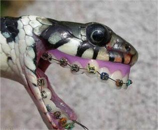 蛇牙套 - 嗡啪搞笑图片