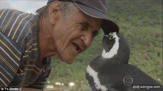 企鹅和渔民的故事