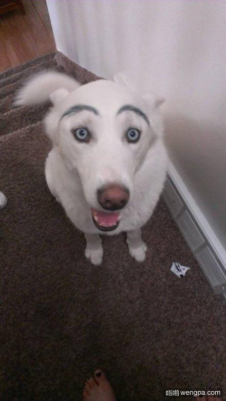 狗狗逗比画眉毛1