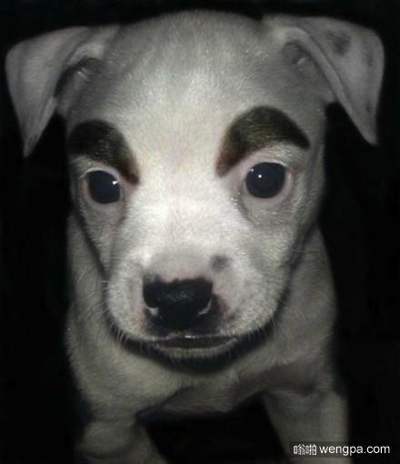 狗狗逗比画眉毛 太搞笑了