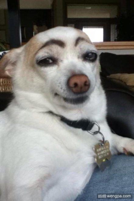 狗狗逗比画眉毛5