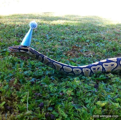 蛇 漂亮的蛇 各种蛇 世界名蛇大全