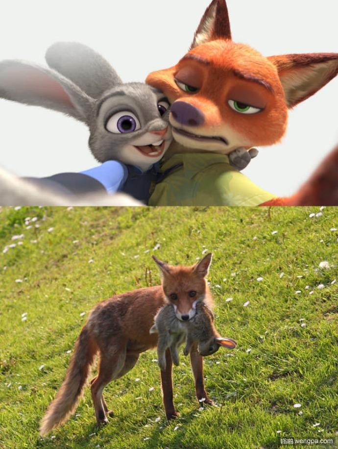 动画片的狐狸与兔子和现实中的狐狸与兔子 - 嗡啪搞笑图片