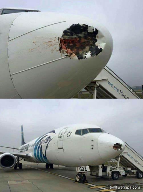 这就是为什么机场要驱鸟 - 嗡啪搞笑图片