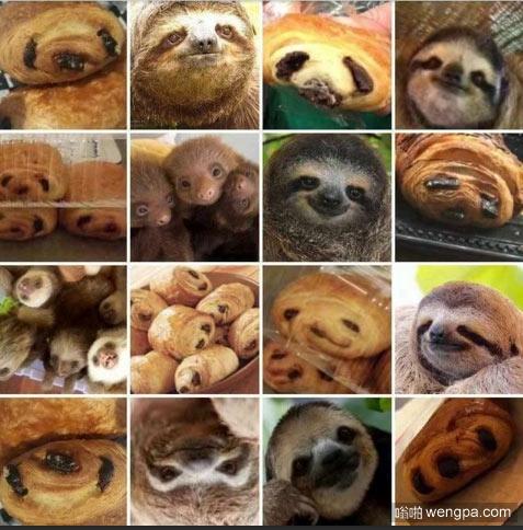 这些面包像树懒的脸_树懒面包 - 嗡啪搞笑图片