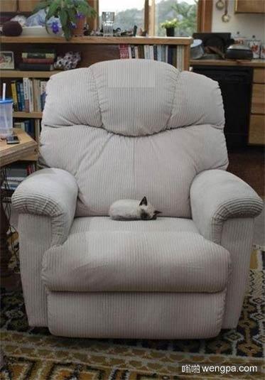 这mini小猫很容易被一屁股坐掉_猫_搞笑动物 - 嗡啪萌宠图片