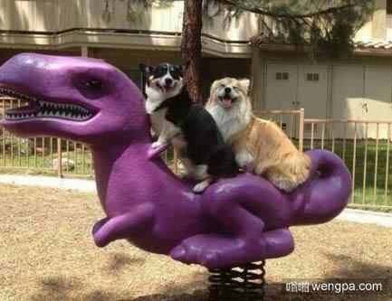 狗狗们玩的很开心