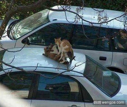 搞笑动物:这是猫中的3P么,太搞笑 - 嗡啪搞笑动物