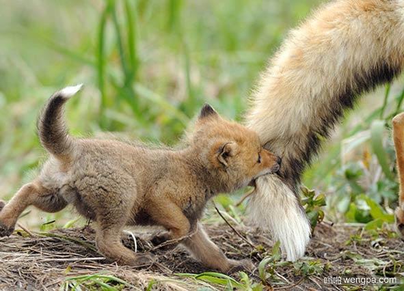 新的Firefox插件
