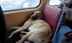 公交车上给一位老 奶奶让座