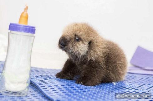 小海豹?来一发最新可爱萌宠动物图片