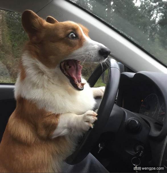 撞到狗了吧 小狗搞笑图片 - 嗡啪萌宠图片
