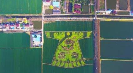 南京农民油菜花田种出巨型龙袍