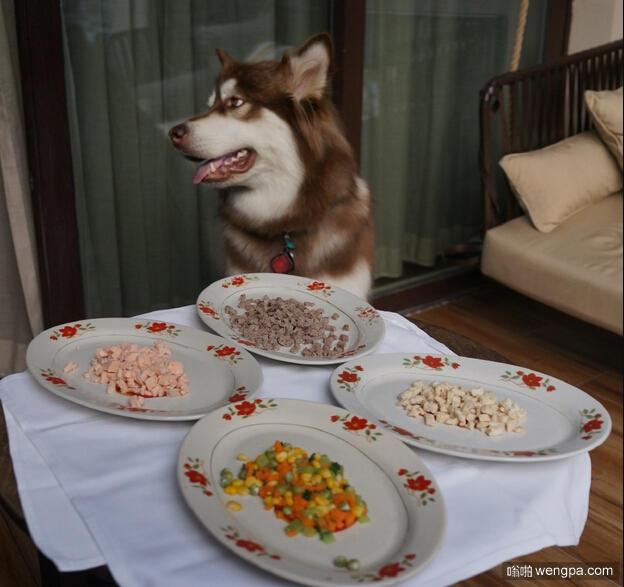 住五星酒店吃豪华大餐 狗与狗的差距咋就那么大