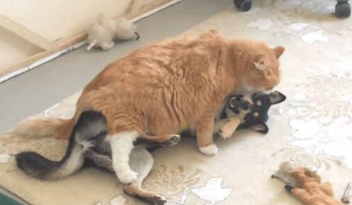 【搞笑动物】猫强奸狗狗_狗狗搞笑图片_猫搞笑图片 - 嗡啪搞笑动物