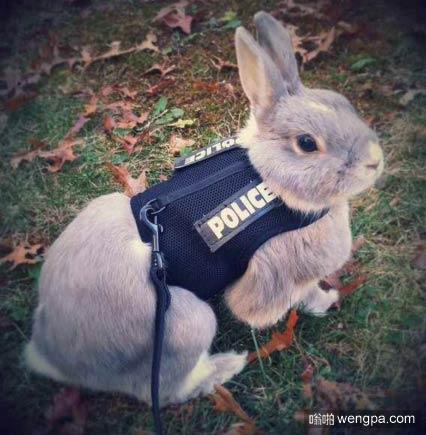 兔子警官现实版_疯狂动物园_搞笑兔子 - 嗡啪萌宠图片