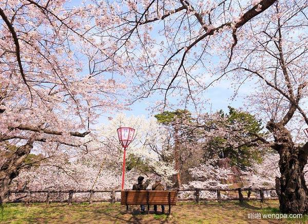 日本的樱花国家地理