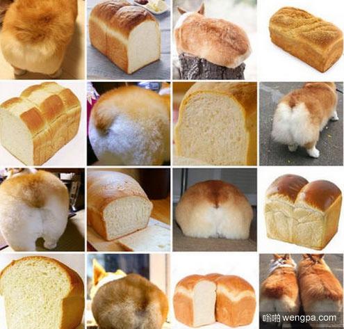 柯基的屁股和面包