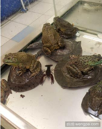 一天乌龟在河里洗澡,癞蛤蟆在一旁看