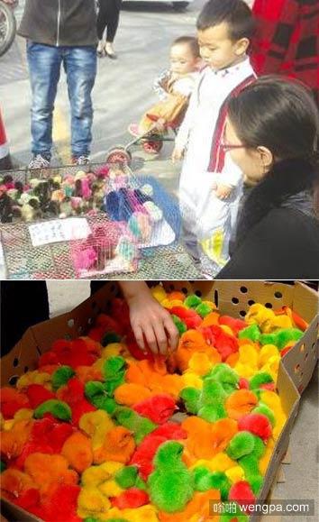【视频】小鸡染色视频曝光 小鸡放入颜料中不乱搅拌 - 嗡啪视频