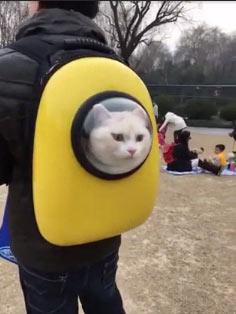 这个猫背包像一个太空服
