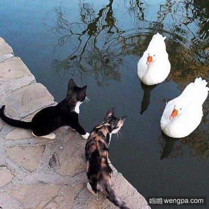 """""""你能帮我抓鱼么""""""""你先给我面包"""""""