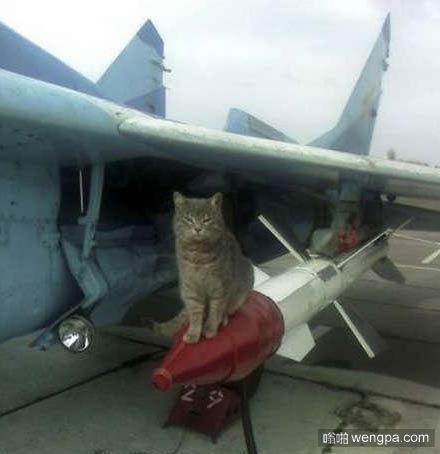 猫搞笑图片喵星人猫坐在导弹-嗡啪萌宠图片