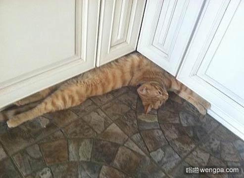 瑜伽猫 这柔韧度 这腰。。。猫搞笑图片 - 嗡啪萌宠图片