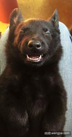 这是我第一次养狗