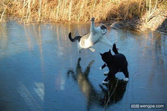 功夫猫颐和园野湖茬架