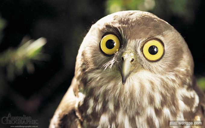 什么!猫头鹰的搞笑表情包
