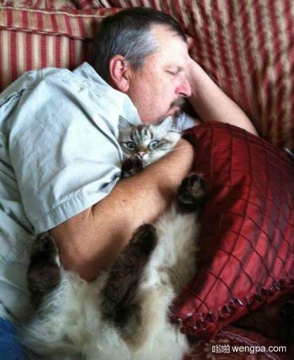 爸爸说他不喜欢那只猫,看到这个…