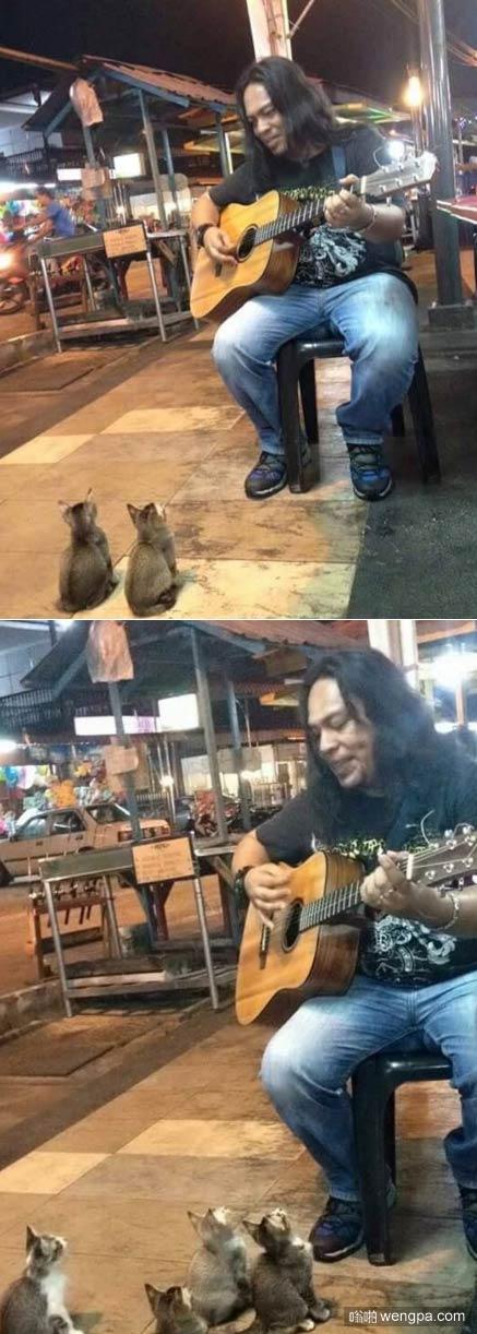 【视频】听歌的猫 喵星人被街头艺人的吉他歌声吸引