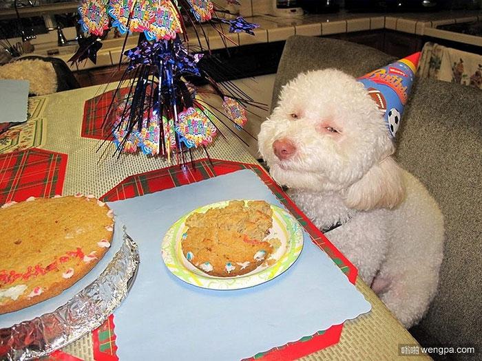 20+宠物有比你更好的生日聚会