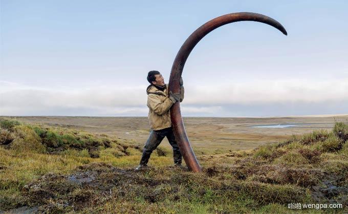 从西伯利亚的河床发现保存完好的猛犸象牙文物