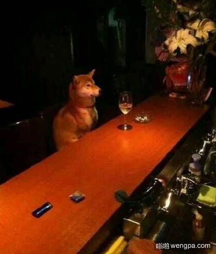 单身狗深夜买醉