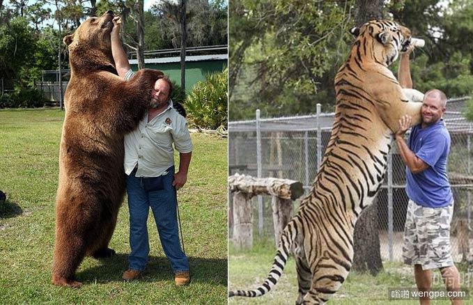 老虎和熊谁厉害 看了《奇幻森林》熊真打不过老虎吗
