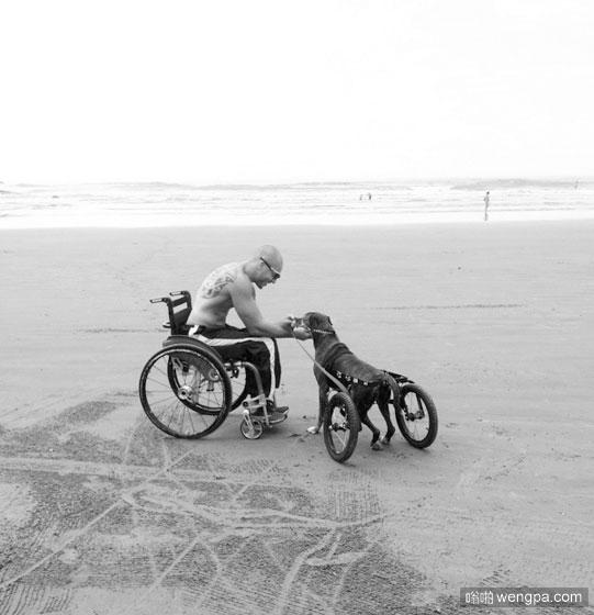 狗狗图片,感人狗狗图片,轮椅狗狗图片 - 嗡啪狗狗图片
