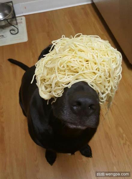 狗狗顶面条 这是不是有点浪费粮食