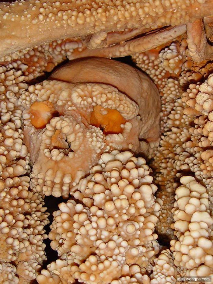 阿尔塔穆拉人头骨融入钟乳石 密集恐惧症者慎点
