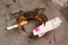 【搞笑段子】砖家为了证明螃蟹的听觉在腿上
