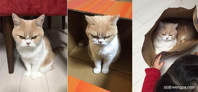 不爽猫愤怒的日本表弟小雪(9P)