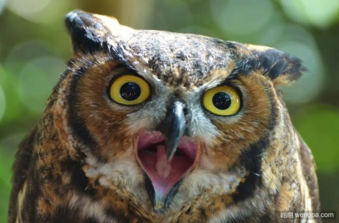 猫头鹰有3种设置:震惊、失误、你小心点
